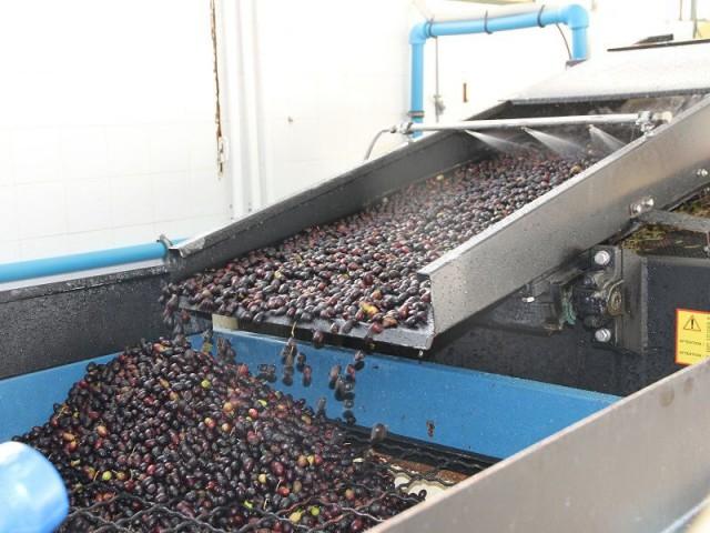 Insolite : Quand les noyaux d'olives servent de combustible...