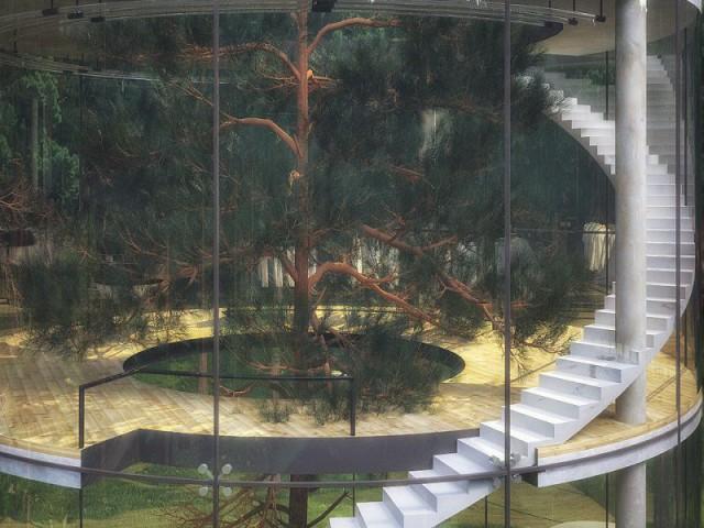 Tree House, une maison fortement végétalisée - Tree House