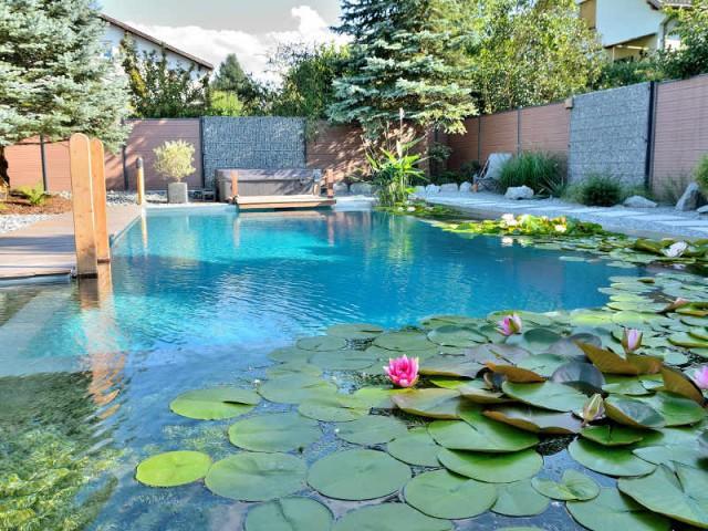 Une piscine naturelle en Alsace