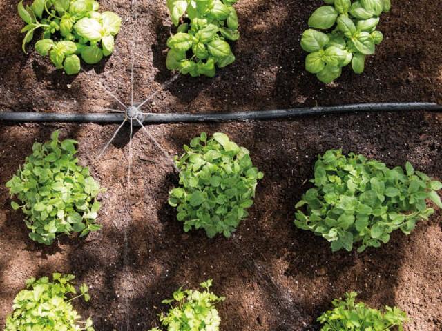 Un système d'irrigation pour maîtriser à distance pour votre jardin  - Prendre soin de ses plantes en vacances