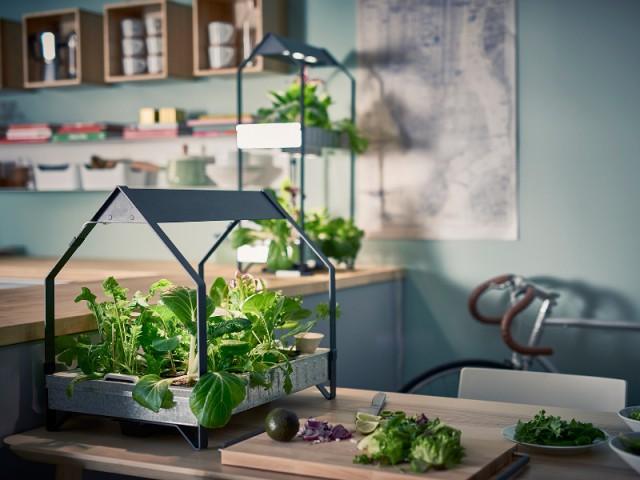 Un mini jardin qui pousse sans terre ni lumière - Prendre soin de ses plantes en vacances