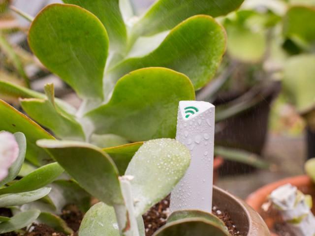 Un boîtier connecté pour surveiller l'hydration de la plante à distance - Prendre soin de ses plantes en vacances