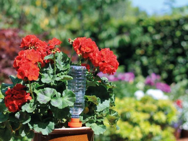 Un cône en plastique breveté hydrate vos plantes en toute autonomie - Prendre soin de ses plantes en vacances