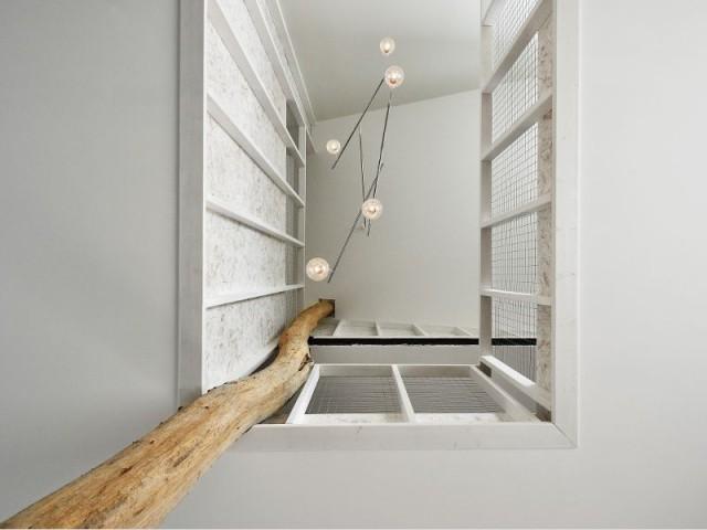 Maison PJ : un acacia vertigineux qui soutient la construction - Maison PJ à Nantes