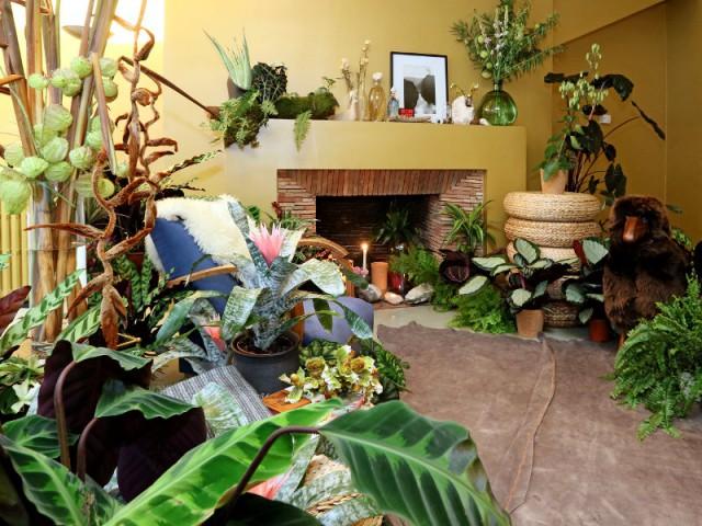 L'harmonie végétale dans votre maison