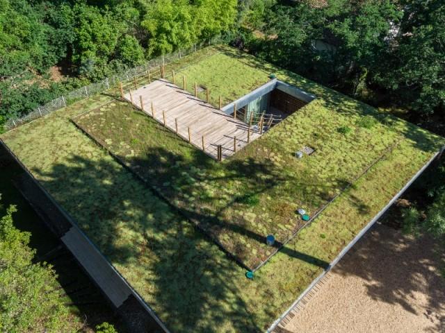 Une toiture végétalisée en plein c½ur des Landes