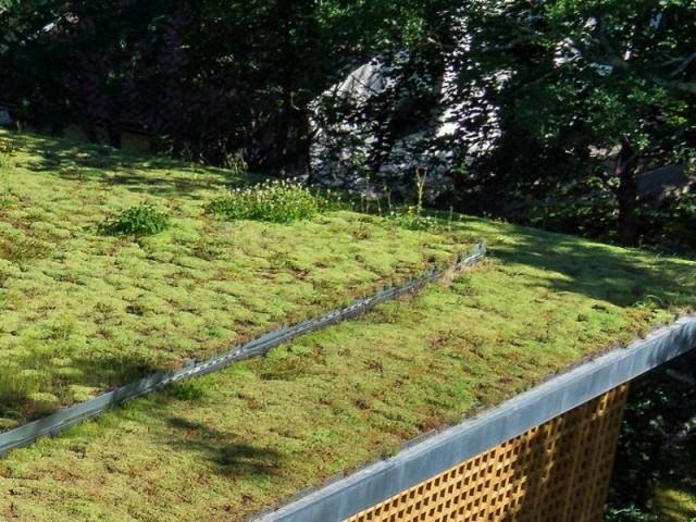 Une toiture où la nature reprend ses droits