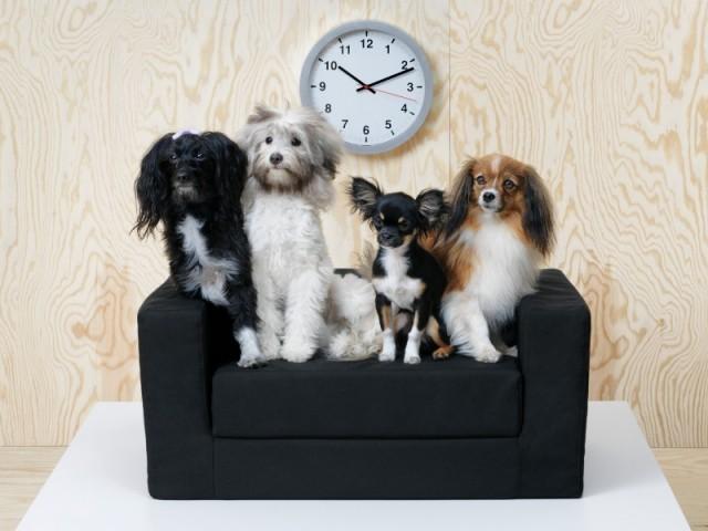 IKEA lance la collection Lurvig pour chiens et chats