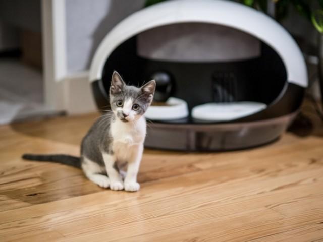 Catspad : une gamelle connectée