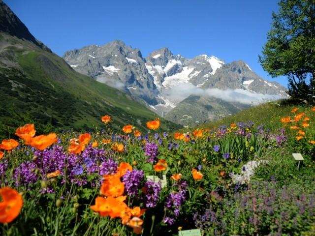 Jardin botanique alpin du Lautaret, Hautes-Alpes