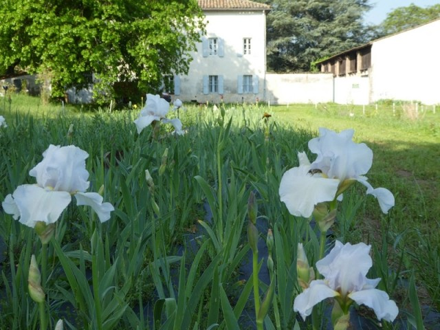 Mas de Bruguerolle dans le Gard