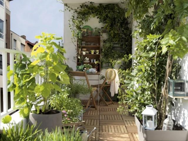 Canicule : installer des plantes permet-il de rafraîchir la maison ?