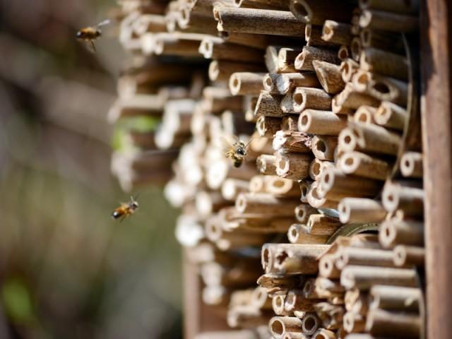 Hôtel à abeilles, Caillard, prix : 51 €