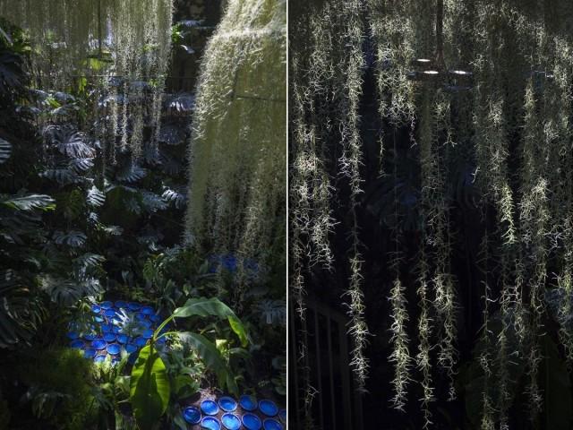 Rainforest, Patrick Nadeau