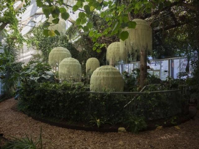 Une installation poétique dans la grande serre de Chaumont-sur-Loire - Rainforest, Patrick Nadeau à Chaumont-sur-Loire