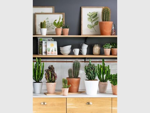 Des plantes faciles à entretenir