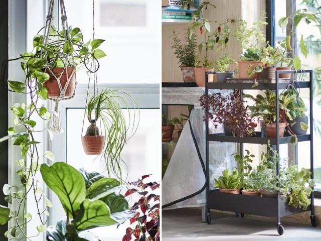 Des plantes dans tous les coins