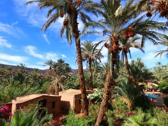 Un écolodge d'exception dans une luxuriante palmeraie