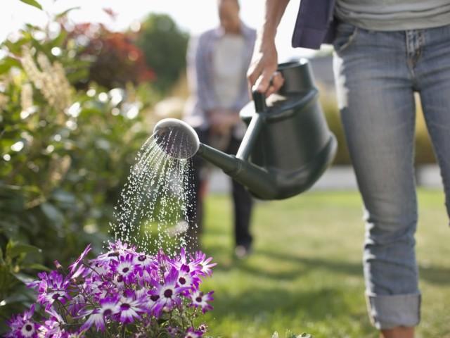 Protéger ses plantes des chaleurs de l'été ou pendant ses vacances
