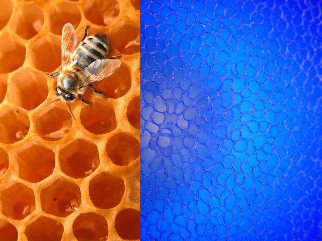 Quand la vie de l'abeille inspire un matériau...