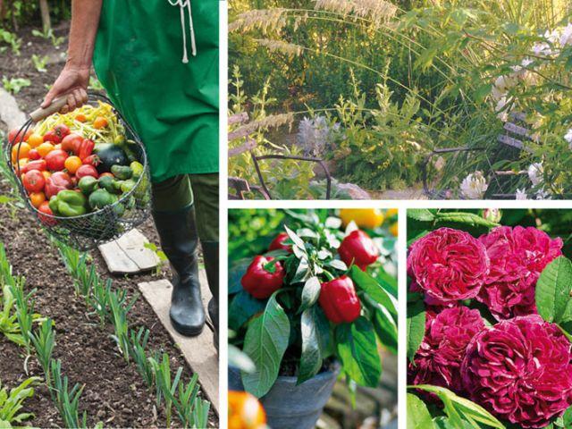 10 livres pour jardiner comme un pro. Black Bedroom Furniture Sets. Home Design Ideas