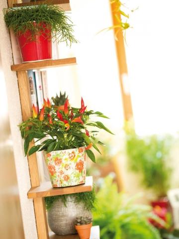 Jardiner en ville que faire pousser sur un balcon for Carre potager sur balcon