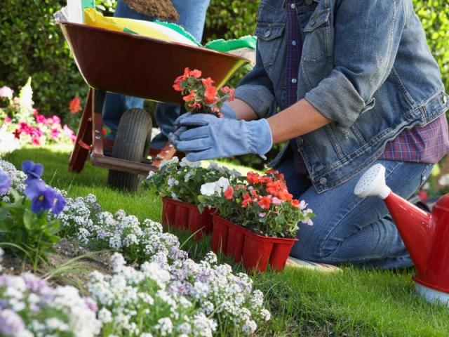 Prendre soin de ses plantes en plein été n'est pas chose facile, en particulier pendant la canicule