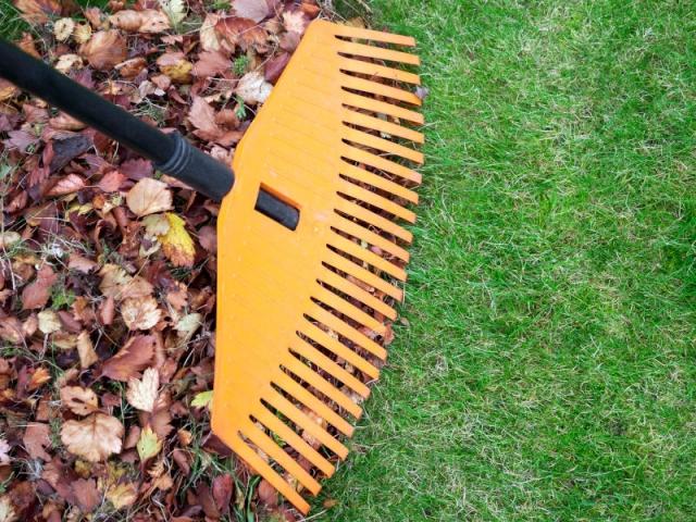 Ramasser les feuilles mortes à l'aide d'un balai, à l'automne