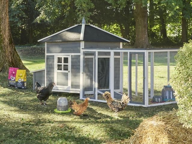 Choisir le poulailler adapté aux poules et au jardin