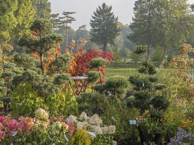 Journées des Plantes : du 9 au 11 octobre 2020 à Chantilly