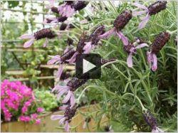 Jardin, terrasse, balcon : végétaliser des petits espaces (vidéo)